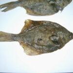 Plattfisch -Flunder 1 St