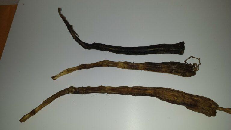 Ochsenschwanz lang (1)