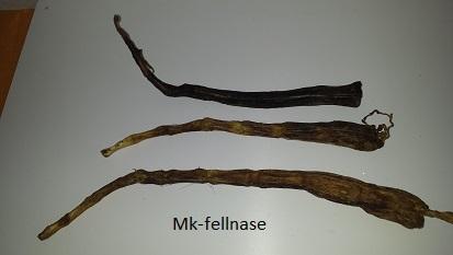Ochsenschwanz lang (2)