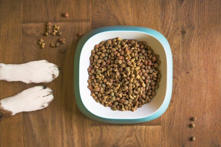 dog-food-5168940_1920
