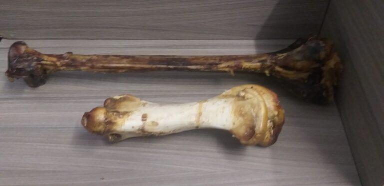 Straußenknochen